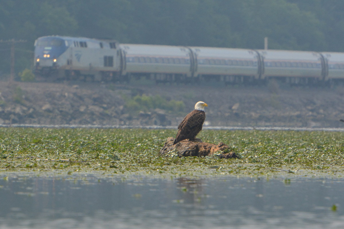 Hudson River Eagles 19